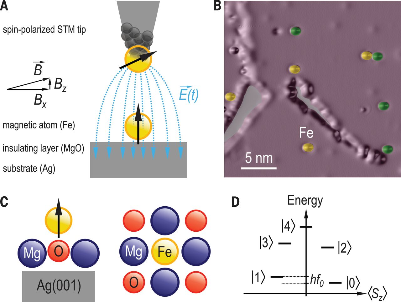 single molecule magnets and single chain magnets analysis Single-chain magnet (net4)[mn2(5-meosalen) 2fe(cn)6] made of mniii-feiii- mniii trinuclear single-molecule magnet with an st = 9/2 spin ground state.